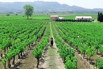 Provence, France | Vineyards