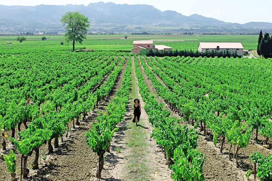 Vineyards of Provence, France | Travel | Grease & Glamour