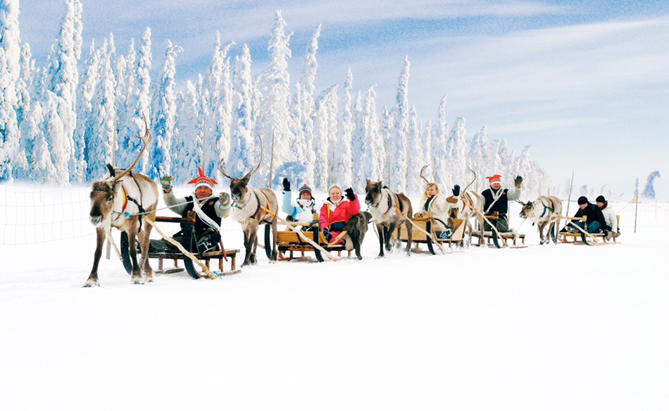 Reindeer Sledding Finland
