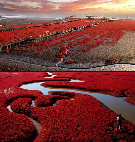 Red Beach Panjin China | Travel