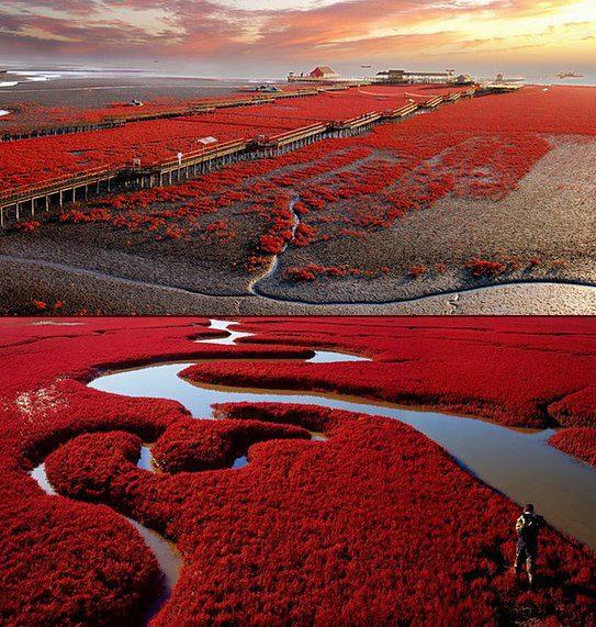 Red Beach Panjin China | Travel