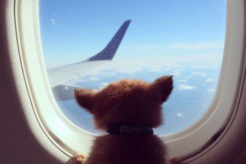 pet-friendly-airlines