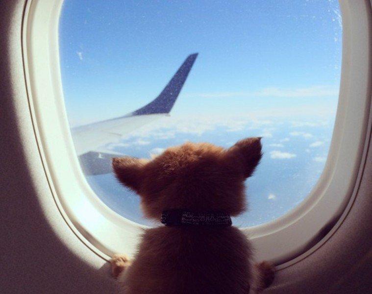 pet-friendly-airlines