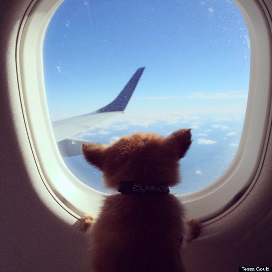 The top 26 pet friendly airlines huffpost for Airlines that allow dogs in cabin