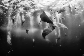 whalewhisperers