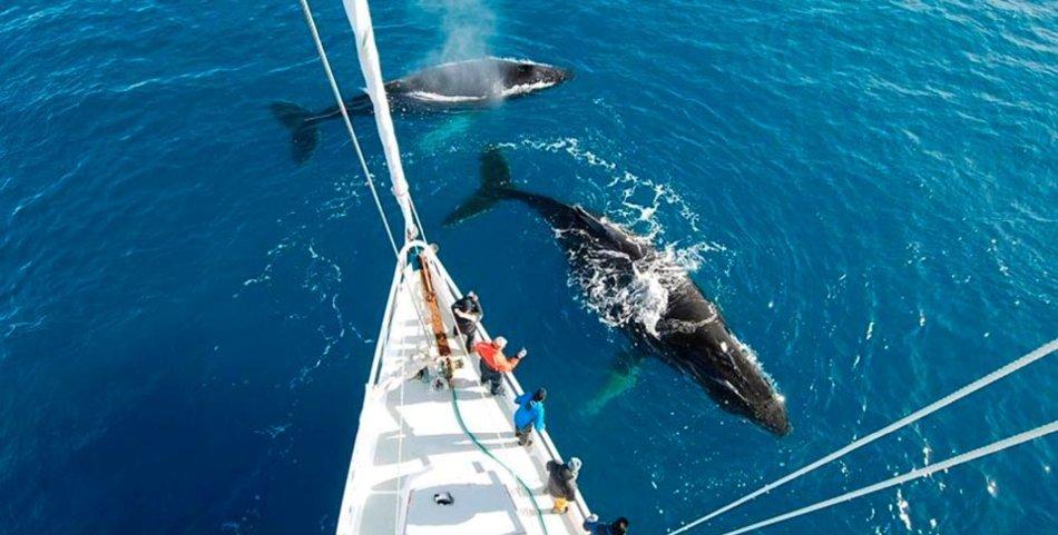 2 Humpback whales under the bow Photo: Ben Wallis Location: Dallmann Bay