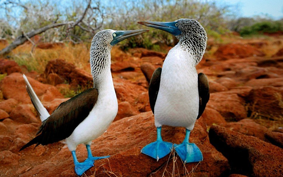 Galapagos Islands | Travel | @projectinspo