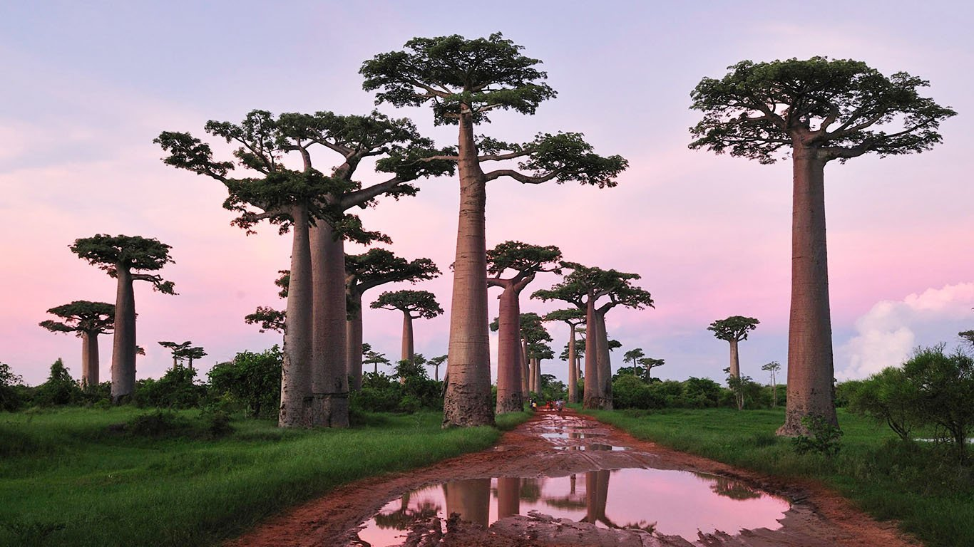 Avenue-of-the-Baobabs-in-Menabe-Madagascar-popcorn