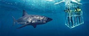 shark2_940_390_90auto_s_c1_