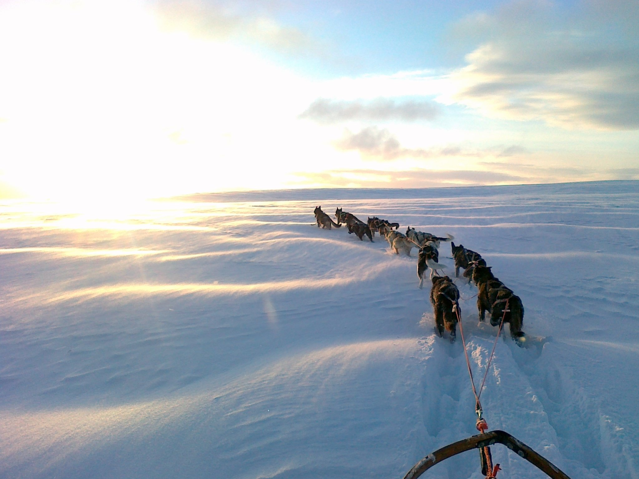 Dog Sledding | @projectinspo